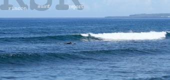 Rincon Surf Report – Friday, Feb 26, 2016