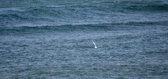 Rincon Surf Report – Friday, Jul 9, 2021