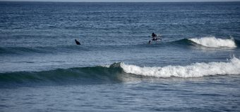 Rincon Surf Report – Friday, Sep 3, 2021