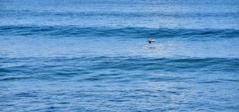 Rincon Surf Report – Sunday, Oct 17, 2021